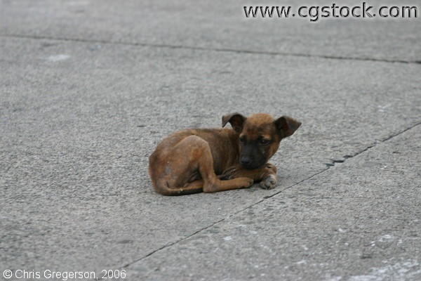 A Sick Dog Alone in the Streets of Balibago