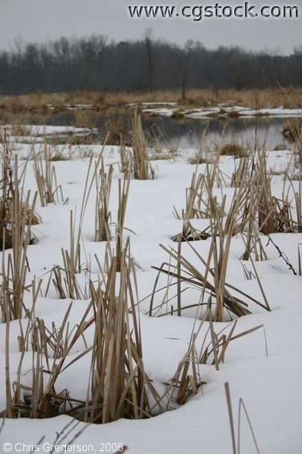 Snow-Covered Marshland in Wisconsin