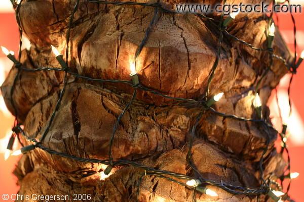 Bark of a Palm Tree with Christmas Lights