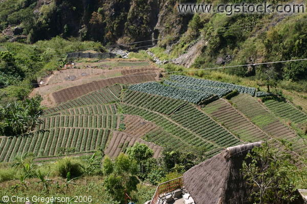 Terraced Farmland From the Observation Deck of Kennon Road, the Philippines