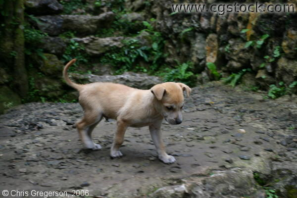 Puppy Along the Walkway of Tam-Awan Village, Baguio City