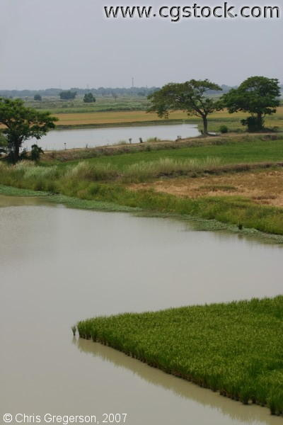 Farm Fields and Ponds Near The National Highway in Luzon, the Philippines