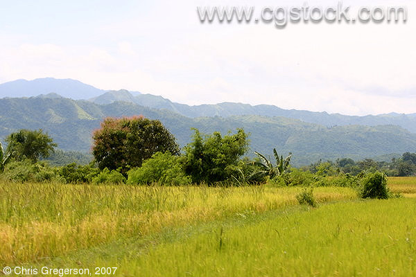 Farm Fields and Mountains in Badoc, Ilocos Norte, the Philippines