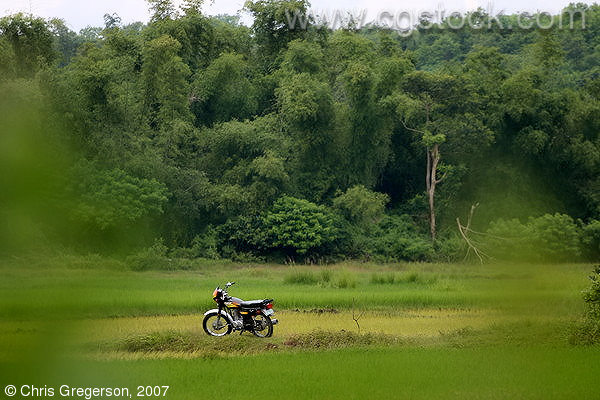 Motorcycle Parked in a Rice Field, Ilocos Norte