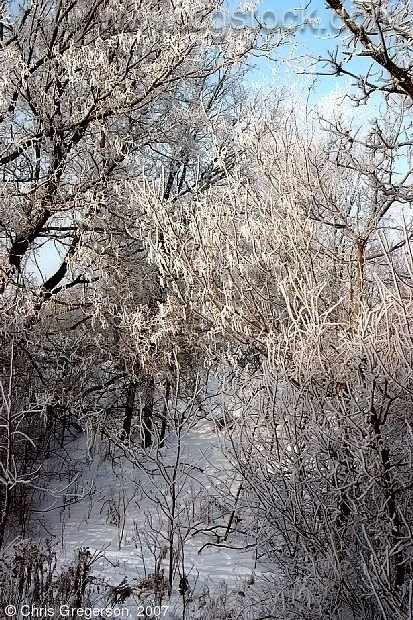 Tree Branches Covered with Winter Frost