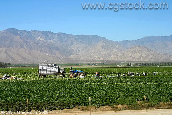 Farm in Imperial Valley, California