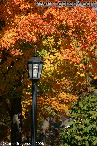 Streetlight and Autumn Colors, Bedford Street
