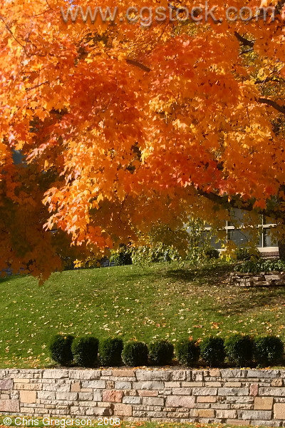 Fall Colors and Landscaped Yard