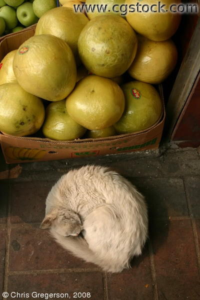 Sleeping Cat in Chinese Marketplace
