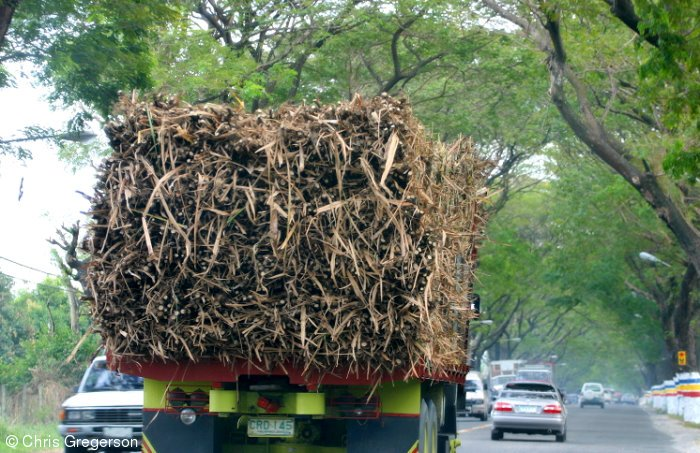 Truckload of Sugar Cane, MacArthur Highway, Pampanga