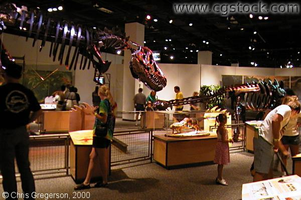 Kinetosaurs at the Science Museum of Minnesota