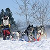 Bear Grease Dogsled Race